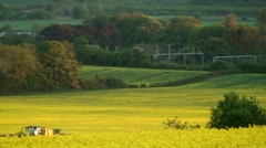 Beautiful Yellow Field Oilseed Rapeseed no5 Pan Out Stock Footage