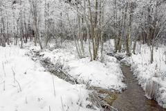 floodplain area in winter schwarzsee, switzerland - stock photo