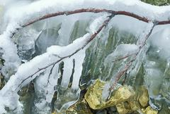 Twigs encased in ice Stock Photos