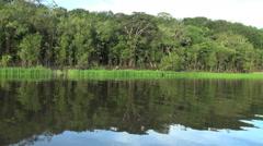 Amazon grassy margin  Stock Footage