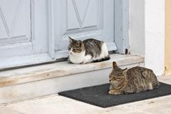 cats are waiting in front of a house entrance for food, firostefani, santorin - stock photo