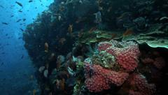 Enchanting coral reef scene with shoals of fish Stock Footage