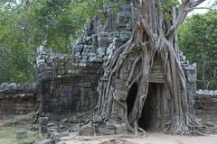 root system on the entrance tower to the ta som temple, siem reap, cambodia,  - stock photo