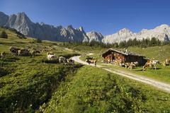 ladiz-alm in the karwendel range, tyrol, austria, europe - stock photo
