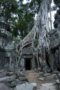 root system of a fig tree on the ruins of the ta prohm temple, siem reap, cam - stock photo