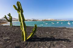 Spain, Canary Islands, Lanzarote, cactuses at Costa Teguise - stock photo