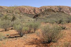 Stock Photo of outback landscape, east macdonnell ranges, northern territory, australia