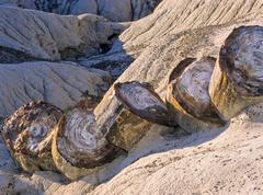 Petrified tree trunk, petrified forest national park, arizona, usa Stock Photos