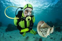 Diver watching Palau nautilus, Nautilus belauensis, in Pacific Ocean Stock Photos