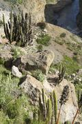 South America, Peru, Andes, Scale model craved in stone depicting the terraced - stock photo
