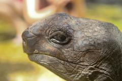 Seychelles, Giant Tortoise at Curieuse Island, Portrait Stock Photos