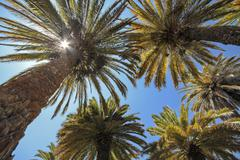 South America, Peru, Tropical palms against the blue sky and sun - stock photo