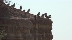 Sparrows sitting on sandy hill kanena  4k Stock Footage