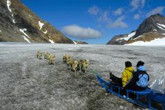 Dog sled team driven by greenlandic inuit, apusiak glacier, eastern greenland Stock Photos