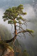 Germany, Saxony, single tree on slope at Elbe Sandstone Mountains Stock Photos