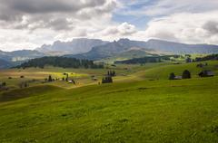 Italy, South Tyrol, Dolomites, Seiser Alm, High altitude alpine meadow - stock photo