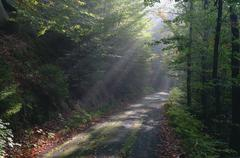Germany, Saxony, Saxon Switzerland, Kirnitzsch, sunbeams shining on forest track Stock Photos