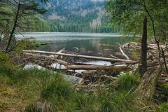 glacial devil`s lake surrounded by the forest - stock photo