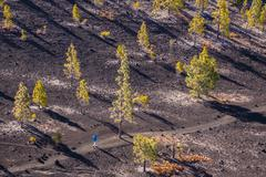 Spain, Canary Islands, Tenerife, Mirador de Chio, Canary Island Pines, Pinus Stock Photos