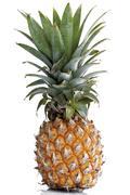 miniature pineapple (ananas comosus) - stock photo