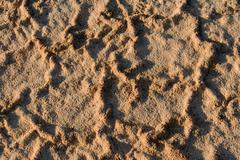 Texture, salt pan ground after a brief rainfall Stock Photos