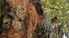 Rock with trees Stock Footage