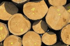 Partially tagged, stacked spruce trunks, logs, cross-section of desiccation c Stock Photos