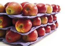 trays of red apples - stock photo