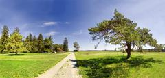 road with isolated pine (pinus) and green meadow near titting in the altmuehl - stock photo
