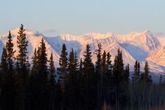 st. elias mountain range, spruce trees, yukon territory, canada, north americ - stock photo