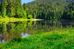 Coniferous coast of river in  mountains horisontal Stock Photos