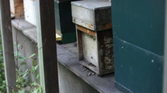 battered beehive busy with bees - stock footage
