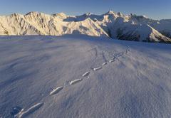 Stock Photo of tracks in the snow, tux alps, tyrol, austria, europe
