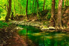 Green treetops in a forest creek Stock Photos