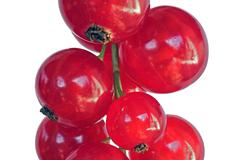 Stock Photo of red currant, macro, cut out