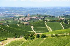 Stock Photo of summer landscape in langhe (italy)