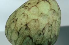 cherimoya (annona cherimola) - stock photo