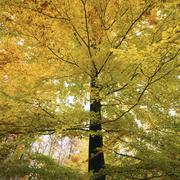 deciduous forest in autumn, baden-wurttemberg, germany - stock photo