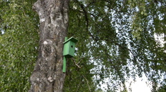 Green bird house nesting-box hang on old birch tree trunk - stock footage