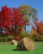 Bales of hay on meadow in autumn, indian summer, new hampshire, usa Stock Photos