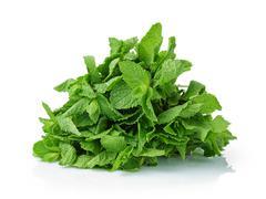 bunch of fresh mint - stock photo