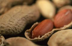 peanuts (arachis hypogaea) - stock photo