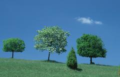 Stock Photo of small leafed limes and rowan ash, baden-wurttemberg, germany / (tilia cordata