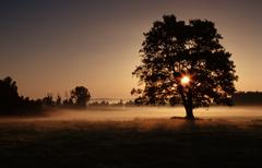 tree at sunrise in morning haze, baden-wurttemberg, germany - stock photo