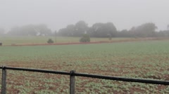 Pull Focus on a Misty English Field Stock Footage