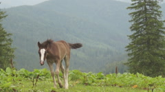 Stallion in a meadow Stock Footage