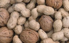 peanuts and walnuts (arachis hypogaea), (juglans regia) - stock photo