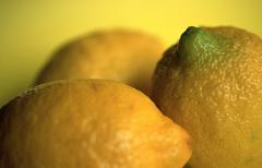 Lemons (Citrus limon) - stock photo