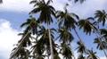 Palm Trees Against Blue Sky. Speed up. HD Footage