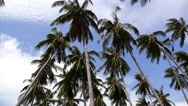 Stock Video Footage of Palm Trees Against Blue Sky. Speed up.